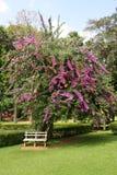 Bank onder een boom Royalty-vrije Stock Foto's