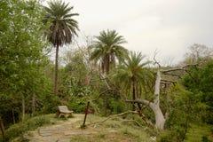 Bank onder palmen in openbaar park Stock Fotografie
