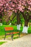 Bank op de bestrating in het park op gras en sakura Royalty-vrije Stock Afbeeldingen