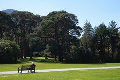 Bank op park royalty-vrije stock afbeelding