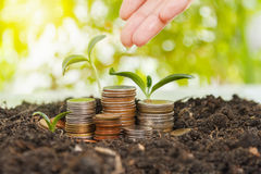 Bank,piggy bank,Money,Coins,Concept,Tree, Sprout growing on glas Royalty Free Stock Photography