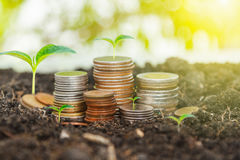 Bank,piggy bank,Money,Coins,Concept,Tree, Sprout growing on glas Stock Photo