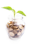 Bank,piggy bank,Money,Coins Royalty Free Stock Images