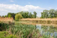On the bank of a pond in the Danube Park of Vienna stock photography
