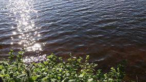 Bank of the pond with green leaves. stock video footage