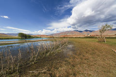 Bank of the river in Altai Mountains Royalty Free Stock Photo