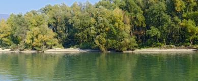 Bank of the river Danube. Riparian forest at the bank of the river Danube in the Wachau valley, Austria royalty free stock image
