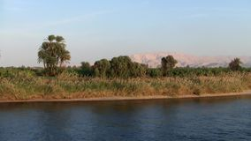 The bank of the river Nile in Egypt with Palms and Grass. Palms and dry golden grass on the bank of the river Nile in Egypt stock footage
