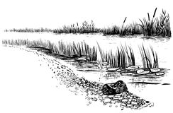 Bank of the river or swamp with reed and cattail. Sketchy style. Black and white vector illustration of river landscape. Bank of the river with reed and cattail Royalty Free Stock Photo