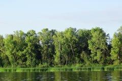 Bank rzeka z obfitą zieloną roślinnością Fotografia Stock