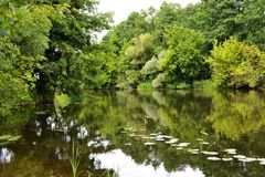 On the bank of a small river. Sultry summer day Royalty Free Stock Photos