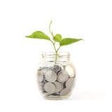 Bank, Sparschwein, Geld, Münzen Lizenzfreie Stockfotos