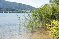 Bank of the Tegernsee in Bavaria Stock Images