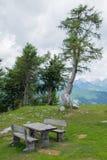 Bank und alte Kiefer auf dem Berg Vogel, Slowenien Stockfotografie