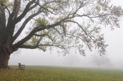 Bank und Baum im Herbst-Nebel Lizenzfreie Stockbilder