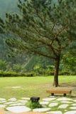 Bank und Baum im Park Stockbild