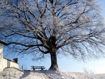 A bank under the tree 5. The bank under the tree in winter season Stock Images