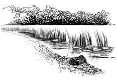 Bank van de rivier met riet en cattail Schetsmatige stijl Stock Foto