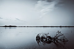 Bank van Volga rivier Royalty-vrije Stock Afbeelding