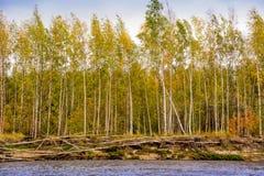 Banken av floden Nadym Yamal Beutifull landsape arkivfoto