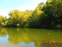Banken av floden overgrew med träd Arkivfoto