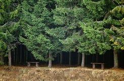 Banken bij de rand van een bos Stock Foto's