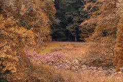 Banken in het bos Stock Afbeeldingen