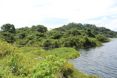 Banker av en full tropisk behållare i Barinas Venezuela på en delvis molnig dag arkivbilder
