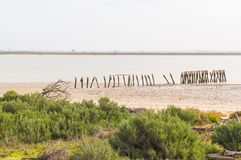 Banker av Guadalquiviren i den Doñana nationalparken arkivfoto