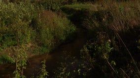 Banker av små skogfloder i sommaren arkivfilmer