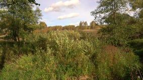 Banker av små skogfloder i sommaren stock video