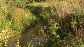 Banker av små skogfloder i sommaren lager videofilmer