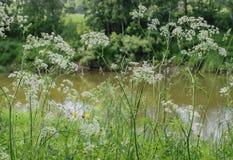 Banki Kotorosl rzeka otaczają greenery Obraz Royalty Free