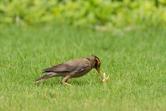 Bankmynafågel och kryp Fotografering för Bildbyråer