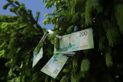 Banknote two hundred Russian rubles. Cash paper green money on the branches of the tree. Finance royalty free stock images