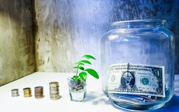 Banknotes in glass jars There are many coin and trees leaf growing royalty free stock photo