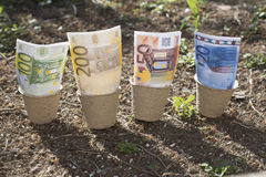 Banknotes in the pots Royalty Free Stock Photo