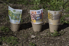 Banknotes in the pots Stock Photos