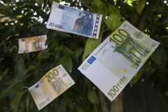 Banknotes on a tree Royalty Free Stock Image