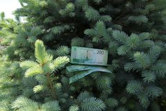 Banknotes Two hundred Russian rubles. Cash paper green money on green spruce. Finance stock photos