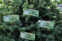 Banknoty Dwieście Rosyjskich rubli Gotówkowy papierowy zielony pieniądze na zielonej świerczynie fotografia stock