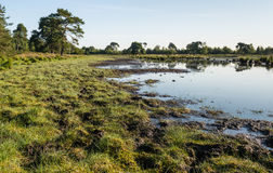 Banks of a fen in a nature reserve Stock Photography