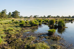 Banks of a fen in a nature reserve Royalty Free Stock Photos