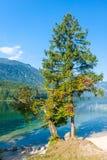 Banks of lake Bohinj at Ribcev laz. Julian alps Royalty Free Stock Photography