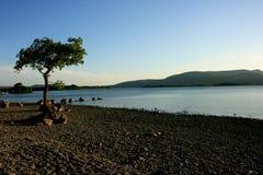 banks Loch Lomond arkivbilder