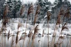 Ogre river in winter. Banks of Ogre river in winter in city of Ogre, Latvija Royalty Free Stock Image