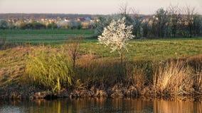 Spring, Corbeanca, Ilfov County, Romania. Banks of river in Corbeanca, Ilfov County, Romania in springtime stock photo