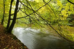 Banks of river with fall colors. Banks of river flowing through sunny forest with fall colors Royalty Free Stock Photo