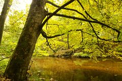 Banks of river in fall colors Royalty Free Stock Photography