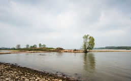 On the banks of the river. On the other side stands a lone tree on a dam in the river. It is cloudy day in the springtime Royalty Free Stock Images